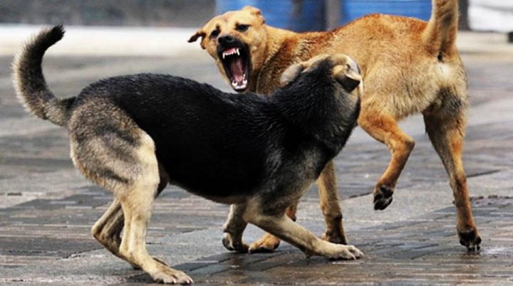 Первый в 2015 году случай бешенства среди животных выявлен в Сергиевом Посаде